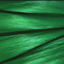 Emerald Green Silk Abaca